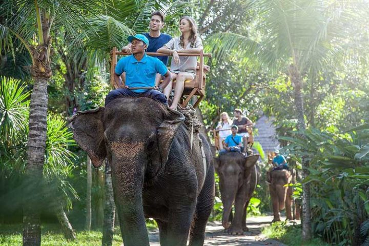 bali back elephant ride