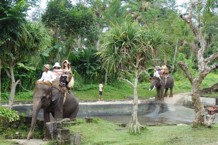 bali elephant camp